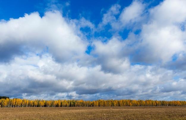 Arbres photographiés et nature à l'automne de l'année, végétation et arbres jaunis