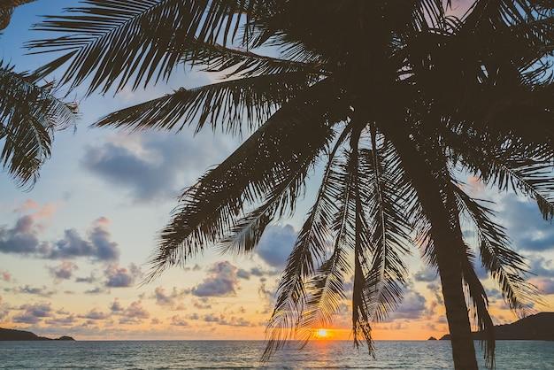 Arbres plage île magnifique côte