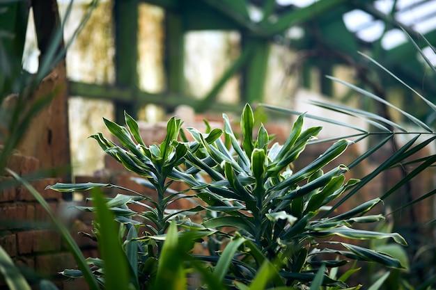 Arbres et plantes exotiques sous un toit dans une serre. maintien du climat pour les plantes thermophiles du jardin botanique. beau fond de printemps.