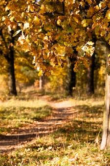 Arbres poussant sur la route d'une saison d'automne