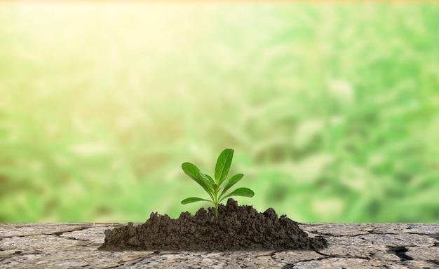 Les arbres poussent dans l'écologie de l'environnement du sol aride