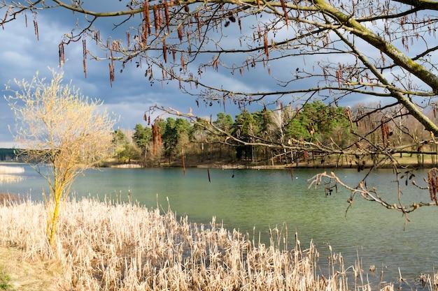 Les arbres printaniers se reflètent dans le lac contre le ciel bleu. floraison des brindilles de saule de pâques. photo de haute qualité