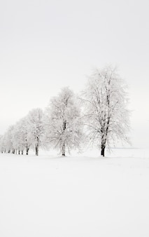 Arbres qui poussent dans une rangée dans une saison d'hiver. la photo est prise sur le terrain