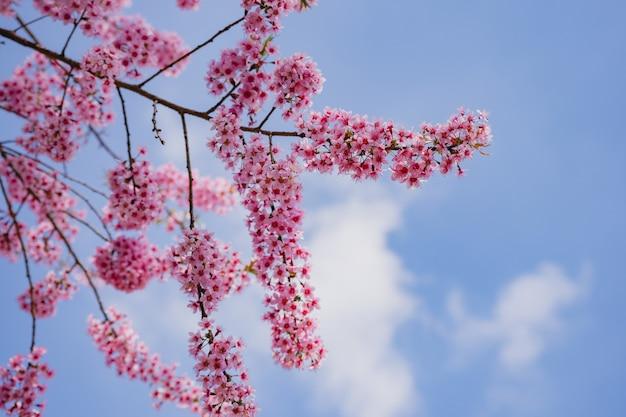 Les arbres qui sont roses et ont un ciel comme arrière-plan