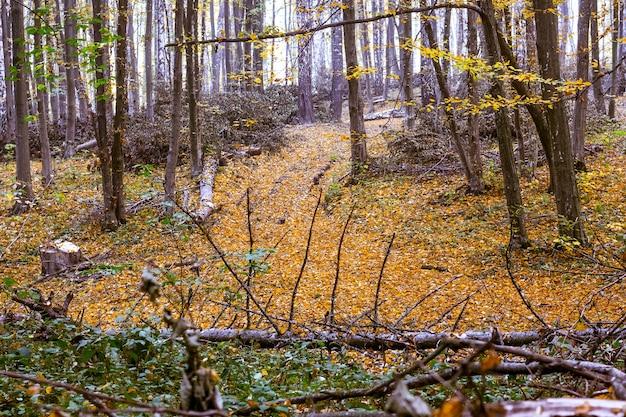 Arbres renversés dans la vieille forêt à l'automne