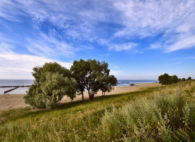 Arbres sur les rives du réservoir de novossibirsk herbe épaisse absinthe arbres luxuriants seuls sur le rivage