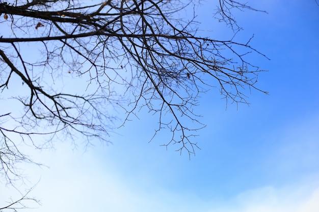 Arbres sans feuilles en hiver à une journée avec un ciel bleu.