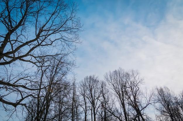 Arbres sans feuilles en hiver