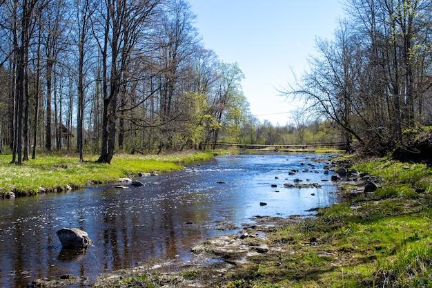 Arbres sans feuilles sur les rives. rive rocheuse d'une rivière peu profonde. la grande rivière jugla à ropazi