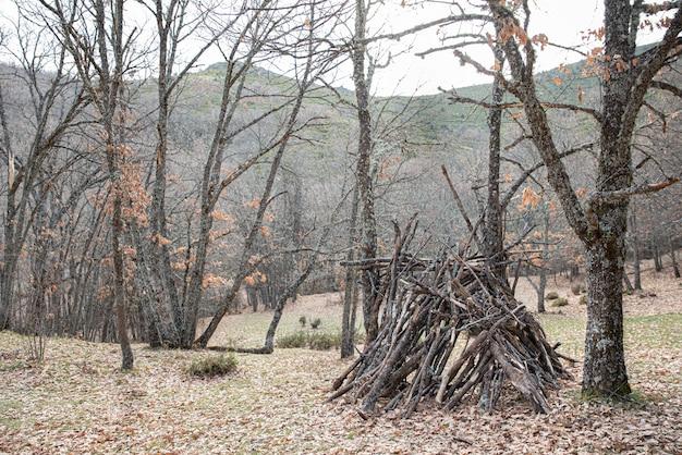 Arbres secs dans la forêt avec des feuilles tombées et une cabane avec du bois de chauffage