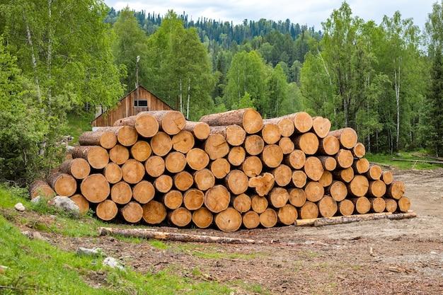 Les arbres sélectionnés sont empilés dans un tas. nettoyage de la forêt en forêt. coupe transversale du tronc d'arbre.