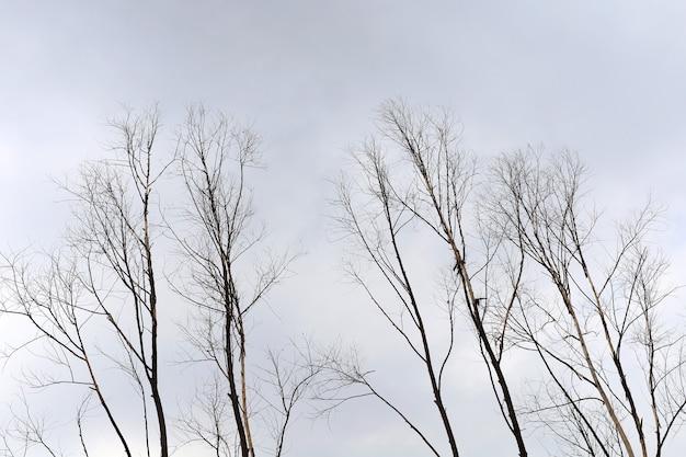 Les arbres sont morts dans la sécheresse, fond de concept de minimalisme