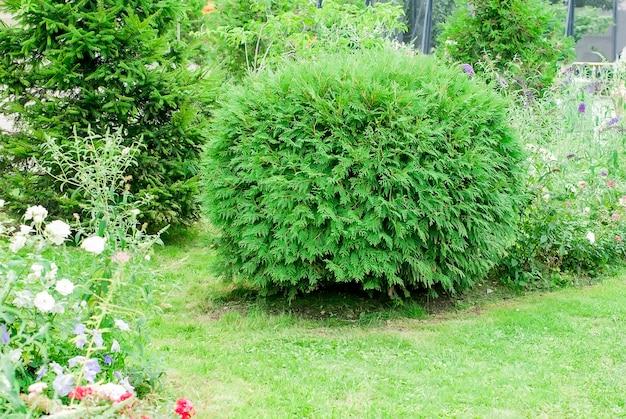 Arbres verts et arbustes dans le parc urbain