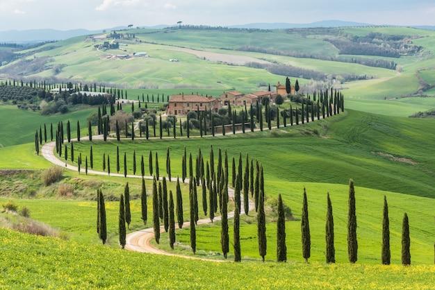Arbres verts le long d'un chemin incurvé dans un champ vert