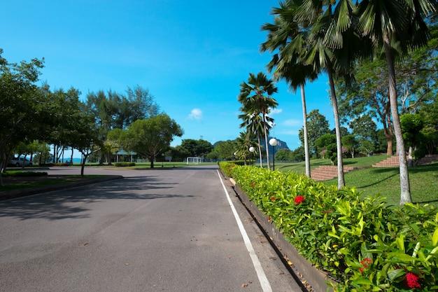 Arbres verts naturels et arbustes avec chemin