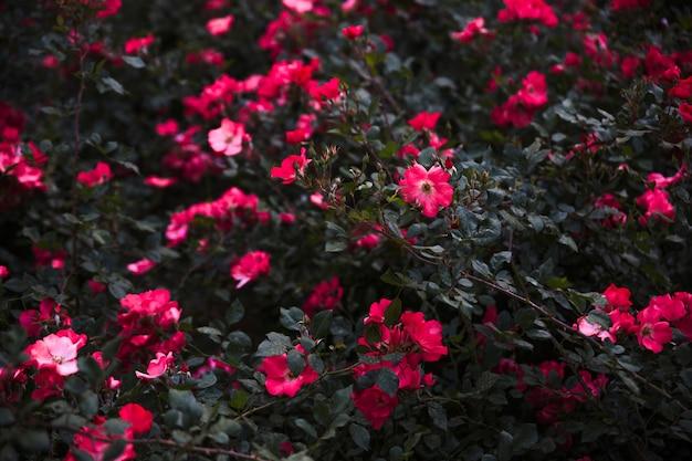 Arbuste aux fleurs vives