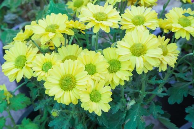 Arbuste à fleurs jaunes