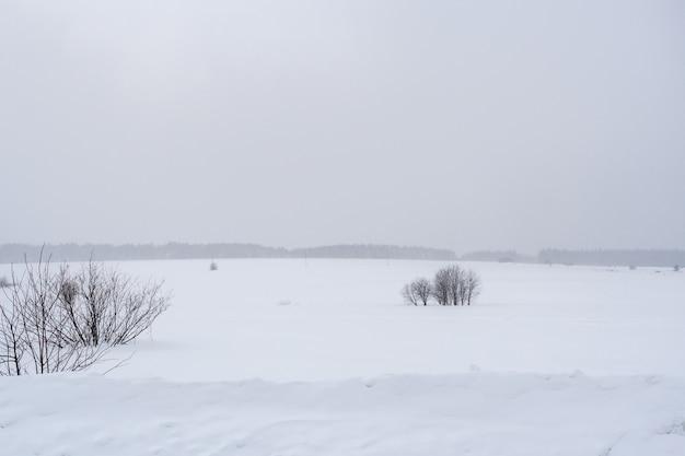 Arbustes nus sur le champ d'hiver enneigé et la forêt à l'horizon.