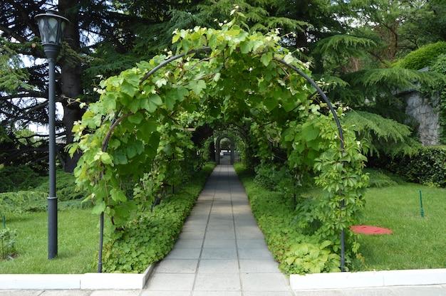Arc et treillis, vigne et lanterne enlacés dans un magnifique parc en été.