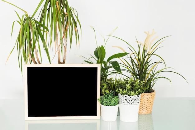 Ardoise noire vierge avec des plantes en pot sur le bureau