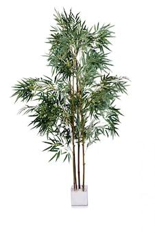 Areca palm isolé sur fond blanc