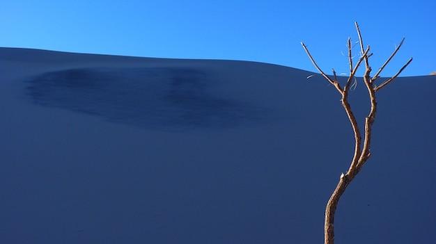 Argentina sable des dunes montagnes des andes arbre solitaire