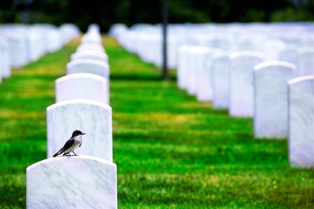 Arlington national cemetery va près de washington dc