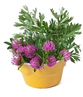 Armoise et trèfle à l'intérieur du pot de fleurs