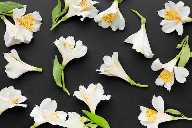 Arrangement de bouquets d'alstroemeria blanc plat