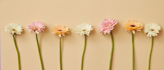 Arrangement créatif de nombreuses fleurs de gerbera colorées sur fond beige pour la fête des mères. haut de page