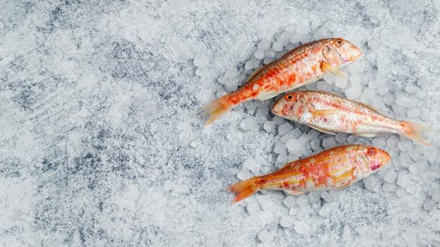 Arrangement créatif de poisson cru