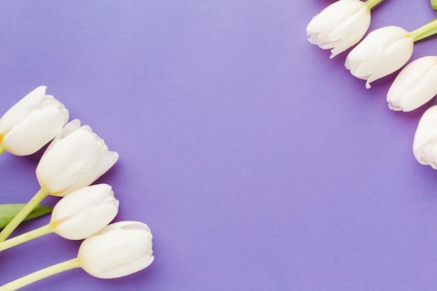 Arrangement d'été de tulipes blanches vue de dessus