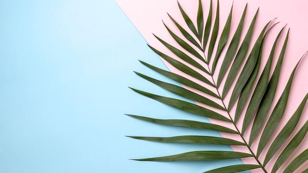 Arrangement de feuilles vertes avec espace copie