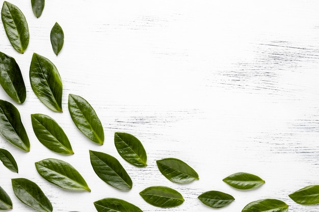 Arrangement de feuilles vertes à plat avec espace de copie