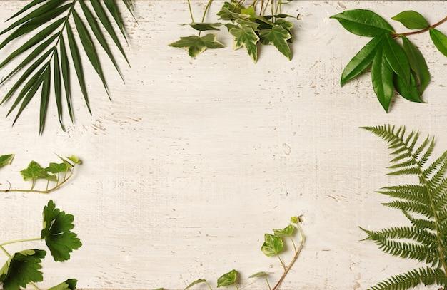Arrangement de feuilles vertes
