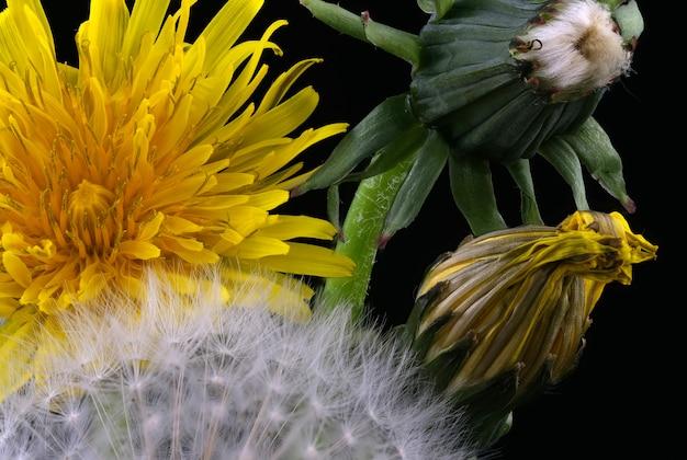 Arrangement de fleurs lyrique avec pissenlit