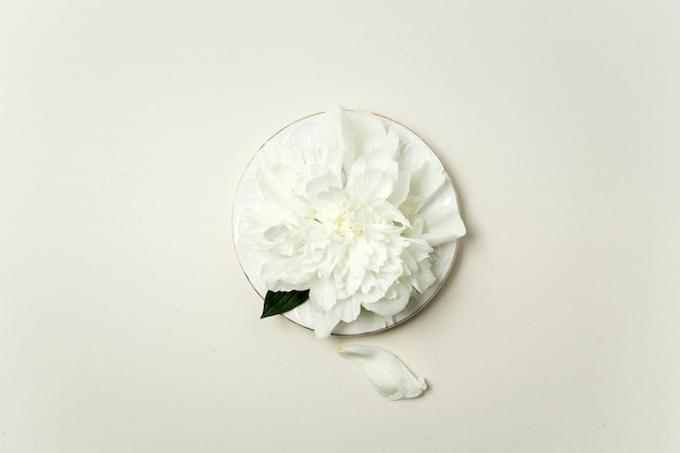 Arrangement floral minimaliste. fleur de pivoine blanche et pétales sur une plaque blanche sur fond pastel, vue du dessus