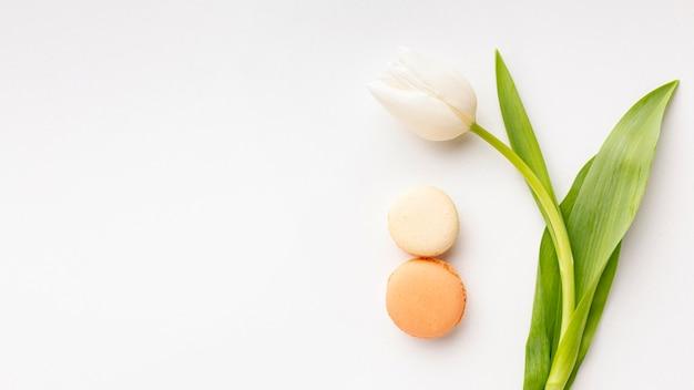 Arrangement de la journée des femmes à plat avec tulipe blanche et espace de copie