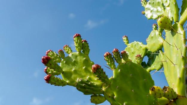 Arrangement minimal de plante naturelle
