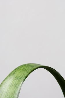 Arrangement de nature morte de plante d'intérieur verte