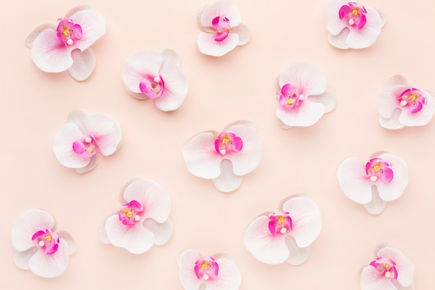Arrangement d'orchidées roses à plat