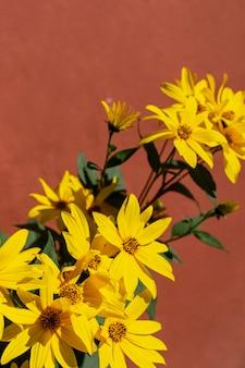 Arrangement de plantes naturelles sur fond monochromatique