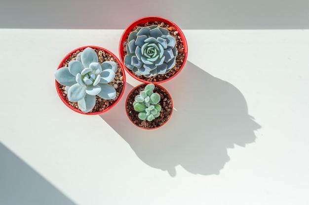 Arrangement de plantes succulentes sur une table