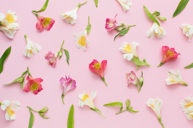 Arrangement plat rose d'alstroemeria