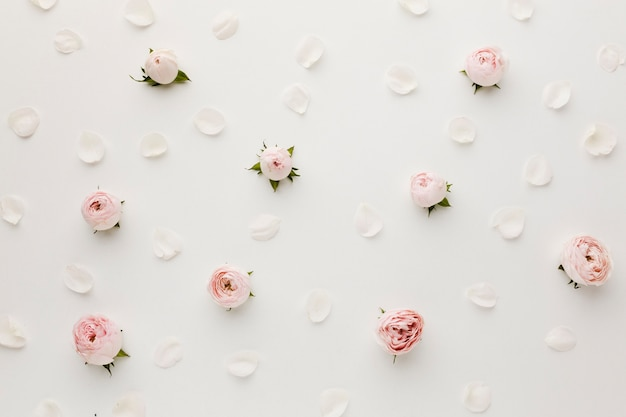 Arrangement de roses et de pétales vue de dessus