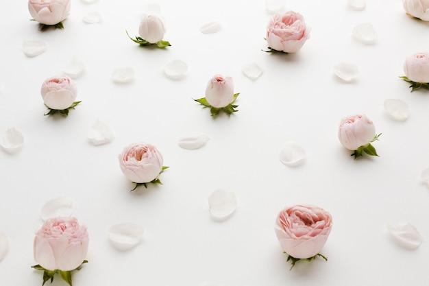 Arrangement de roses et de pétales vue haute