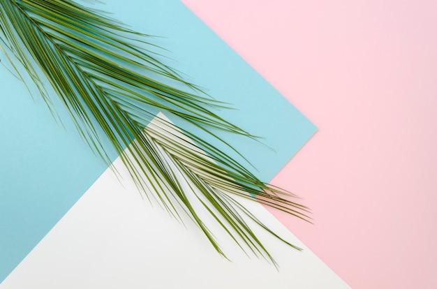 Arrangement de vue de dessus avec des feuilles sur fond coloré