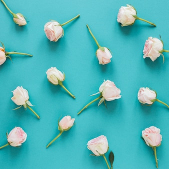 Arrangement de vue de dessus des roses blanches de printemps