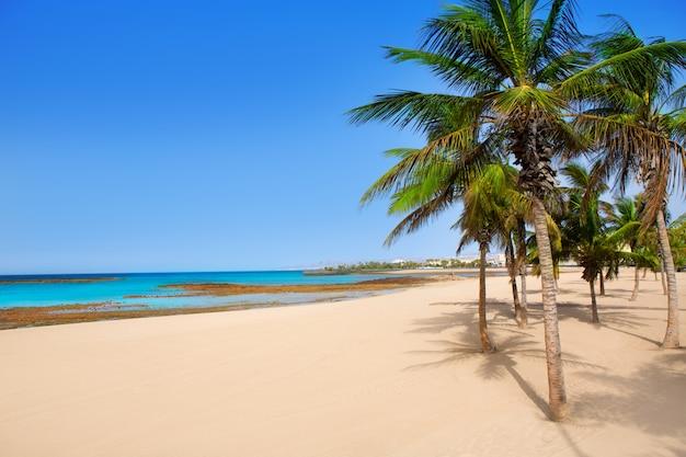 Arrecife lanzarote playa reducto palmiers
