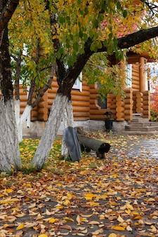 Arrière-cour avec jardin de feuilles mortes avec arbres de jardin et feuilles jaunes qui tombent à la maison en rondins sur brig...
